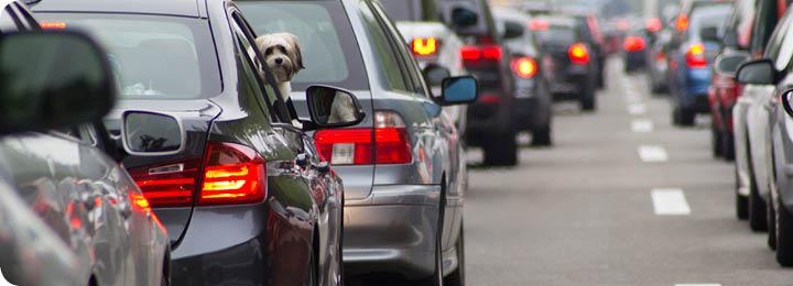 Hond kijkt uit raam auto in file