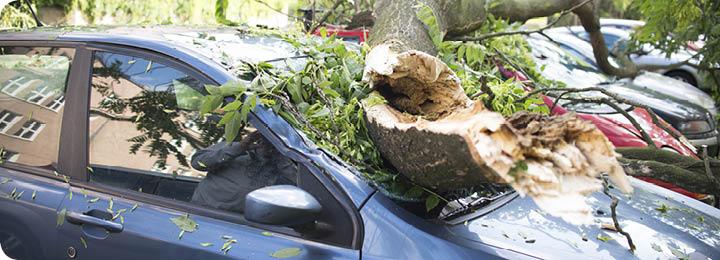 Omgewaaide boom op auto